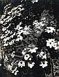 Eugène ATGET (1857-1927) Fleurs, vers 1900-1910 Épreuve gélatino-argentique tirée par Bérénice Abbott dans les années 1950-1960, mon...