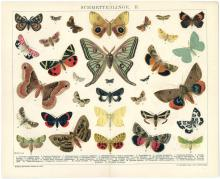 c1900 German Print SCHMETTERLINGE (Butterflies) From BROCKHAUS KONVERSATIONS-LEXIKON