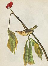 John James Audubon LOUISIANA WATER-THRUSH