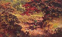 The Flamboyant (Delonix regia) Tree