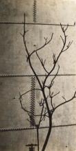 KERTÉSZ, ANDRÉ (1894-1985) Tree study against a riveted metal tank, Hungary.