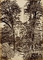 WATKINS, CARLETON E. (1829-1916) Yosemite, on the Road to Yosemite Falls. Mammoth albumen print,