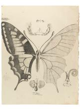 (NATURAL HISTORY.) Goldfuss, Georg August. Group of 10 lithographed plates of natural history subjects,