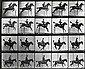 MUYBRIDGE, EADWEARD (1830-1904) Equestrian * Lion and mate. Together, 2 plates from