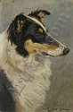 William Luker Junr (1867-1951) A COLLIE Signed,, William (1867) Luker, Click for value