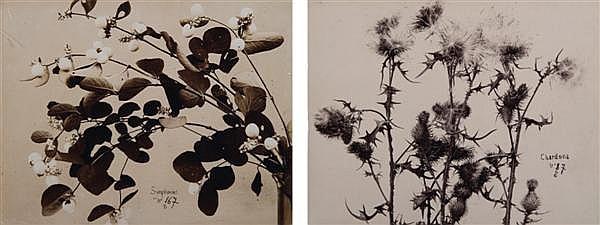 Louis Ollivier (actif de 1890 à 1910) Symphorines et Chardons, vers 1890-1900 Ensemble de 2 épreuves sur papier citrate, signées, lé...