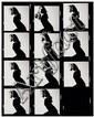 David Bailey (Né en 1938) Candice Bergen, vers 1970 Planche contact de 11 séquences, épreuve argentique, annotée