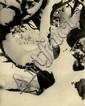 Gilpin, Laura1891 Austin Bluffs/Colorado - 1979 Santa Fe/New MexicoOhne Titel. 1922. Vintage. Platindruck. Passepartout. 12,1 x 9,7cm (14,2 x 13,3cm). Unterhalb des Bildes mit Bleistift signiert und Angabe der Technik. Rückseitig mit Bleistift