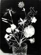 Horn, Hilde1897 Köln - 1943 Krailling (Starnberg)Photogramm mit Wiesenblumen im Glas. 1920er Jahre. Vintage. Gelatinesilberabzug. Agfa-Brovira. Passepartout. 23,9 x 18cm Rückseitig mit Bleistift Sammlungsvermerk. Minimale Gebrauchsspuren. Provenienz: