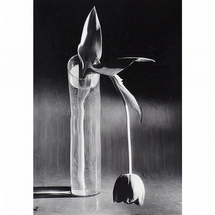 Andre Kertesz (1894-1985), Hungarian/American MELANCHOLIC TULIP, PARIS; Gelatin silver print; signed and dated 1939 in pencil verso, titled to gallery label to the backing9.6