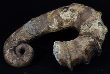 3351g Rare Heteromorph Ammonite Fossil