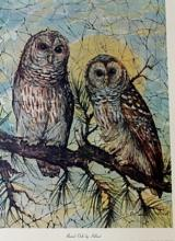 Burred Owls by Helmut (N)
