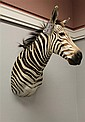 Hartman Mountain Zebra. Namibia, Africa **This item can only be sold to a Pennsylvania resident.**