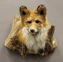 Red Fox Head Mount with Drift Wood, Pennsylvania