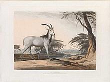 Samuel Daniell, The Tackhaitse.