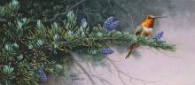 Stephen Lyman - Rufus Hummingbird And Mountain Hemlock