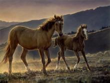 Star & Her Foal