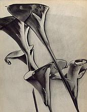 MAN RAY - Original vintage photogravure