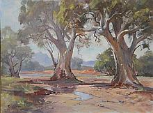 Peter Williams (act. 1990s) New Zealand/Australia Desert Gums Oil on canvs on board