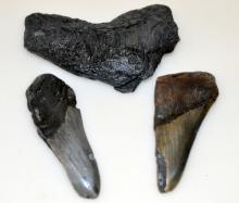 Megaladon fossil stone tooth fragments