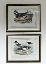 J & E Gould/Red Breasted Merganser/Goosander/two