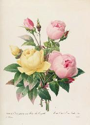 Pierre Joseph Redoute (1759-1840).
