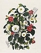 CURTIS, Samuel (1779-1860).  Monograph on the Genus Camellia ... the whole from original drawings by Clara Maria Pope . London: J[ohn]. and A[rthur]. Arch, '1819' [watermarks 1818-1820]., Samuel Curtis , Click for value