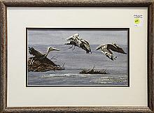 Pelicans in Flight, watercolor