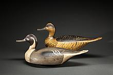 Ward-Style Pintail Pair