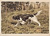 Two Sporting Dog Prints, John Martin Tracy, $250