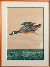 Flying Blue-Winged Teal