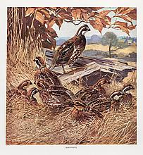 Our American Game Birds: From Paintings by Lynn Bogue Hunt portfolio