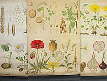 3 Various 19th C Natural History Wall Charts.