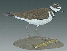 Life Size Killdeer by Franco