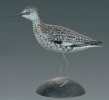 Miniature Willet by A. E. Crowell