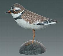 Miniature Semi-palmated Plover by A. E. Crowell