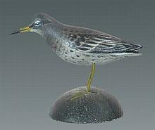 Miniature Purple Sandpiper by A. E. Crowell