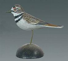 Miniature Killdeer by A. E. Crowell