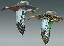 Pair of Flying Cinnamon Teal by Mike Borrett