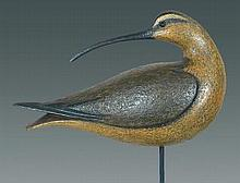 Turned Head Curlew by David Ward