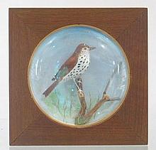 Mini Wall Mount Wood Thrush by Peltier 786.