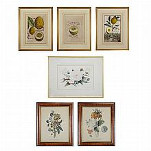Various Artists [CITRUS STUDIES] Three h-c engravings; Together with Three Color Prints Depicting Flowers. (6)