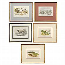 Various Artists [PIG AND SHEEP STUDIES] Six h-c engravings; T/w Various Artists [BIRD, BULL AND FiSH STUDIES] ten color prints (16)
