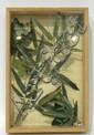 Boîte de MANTES religieuses et PAPILLONS. Les insectes