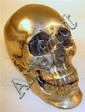 White metal skull model, , Naturalistically cast in two sections.