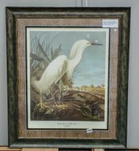 Snowy Heron print by John Audubon