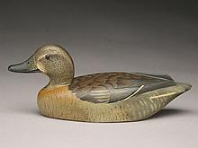 Greenwing teal hen, D.W. Nichol, Smith Falls, Ontario.