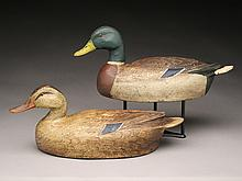 Mallard hen and drake, Ben Schmidt, Detroit, Michigan.