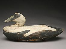 Eider drake from the South Shore of Massachusetts, 1st quarter 20th century.