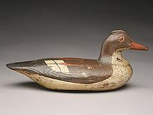 Merganser hen, Long Island, New York, last quarter 19th century.